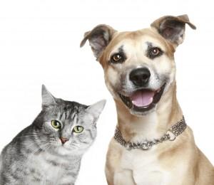 Pet Immune Detectors
